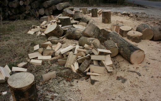 Tilbud på billig træfældning af træer